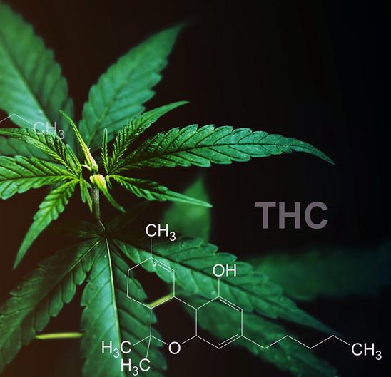 celadon cannabis api